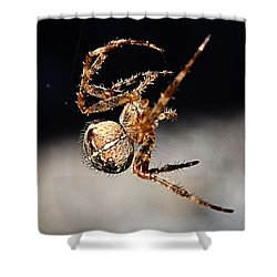 Shower Curtain featuring the photograph Tending The Web Invisible by Chriss Pagani