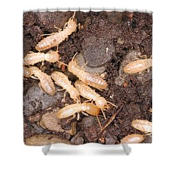 Termite Nest Reticulitermes Flavipes Shower Curtain by Ted Kinsman
