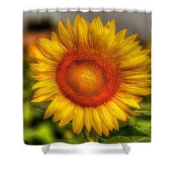 Thai Sunflower Shower Curtain by Adrian Evans