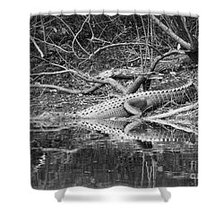 The Beast That Lives Under The Bridge Shower Curtain by Carol Groenen