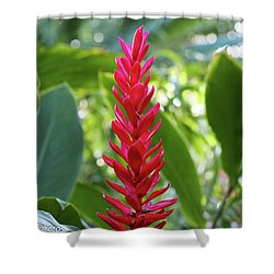 Shower Curtain featuring the photograph The Beauty And The Bokeh by Rachel Cohen