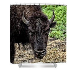 The Bison Stare Shower Curtain by Karol Livote
