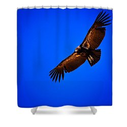 The California Condor Shower Curtain