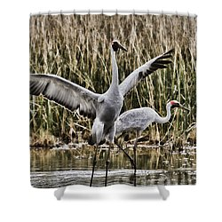 The Conductor Shower Curtain by Douglas Barnard