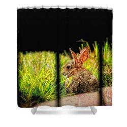 The Culprit Shower Curtain by Lois Bryan