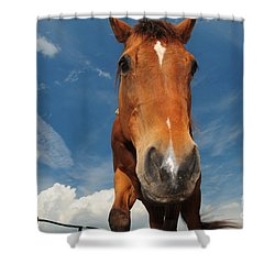 The Curious Horse Shower Curtain by Paul Ward