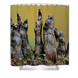 The Cypress Knees Chorus Shower Curtain by Kristin Elmquist