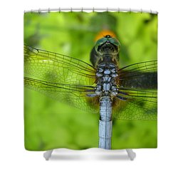 The Details Shower Curtain