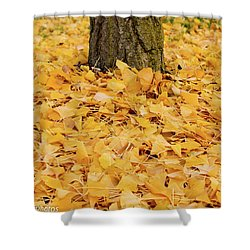Shower Curtain featuring the photograph The Fall Of Ginkgo by Rachel Cohen