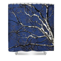 The Family Tree Shower Curtain by Ed Smith