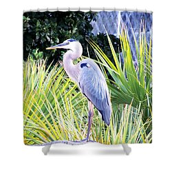 The Great Blue Heron Shower Curtain by Marilyn Holkham