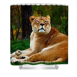 The Lioness Shower Curtain by Davandra Cribbie