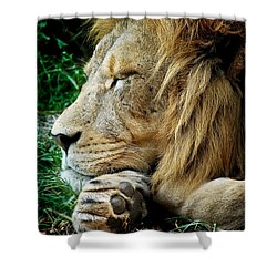 The Lions Sleeps Shower Curtain