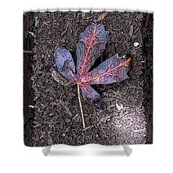 The Maple 5 Shower Curtain by Tim Allen