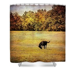The Meadow Shower Curtain by Jai Johnson