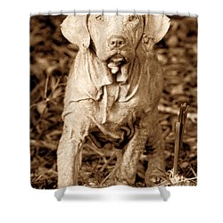 The Old Hunter Shower Curtain by David Lee Thompson