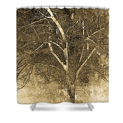 The Orchard Way Shower Curtain by Ron Jones