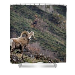Shower Curtain featuring the photograph The Overlook by Steve McKinzie