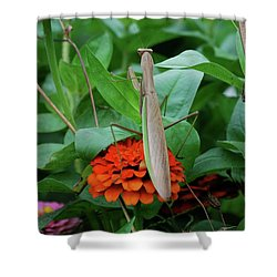 Shower Curtain featuring the photograph The Patience Of A Mantis by Thomas Woolworth