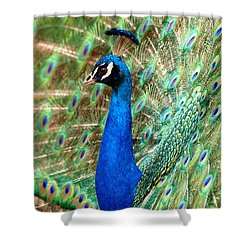 The Peacock Shower Curtain by Paul Ge