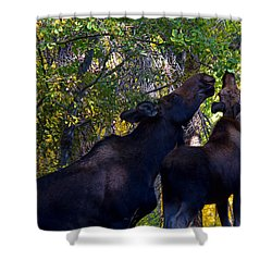 The Picnic In The Park Shower Curtain by Jim Garrison