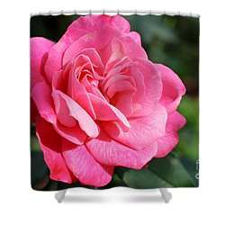 Shower Curtain featuring the photograph The Pink Rose by Fotosas Photography