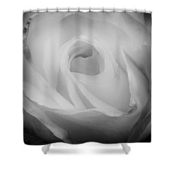 The Princess Diana Rose IIi Shower Curtain by David Patterson