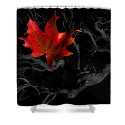 Shower Curtain featuring the photograph The Red Leaf by Beverly Cash