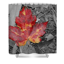 The Red Leaf Shower Curtain by Paul Ward