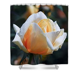 Shower Curtain featuring the photograph The Rose by Fotosas Photography