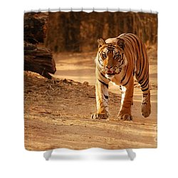The Royal Bengal Tiger Shower Curtain by Fotosas Photography