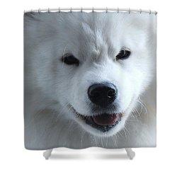 The Samoyed Shower Curtain
