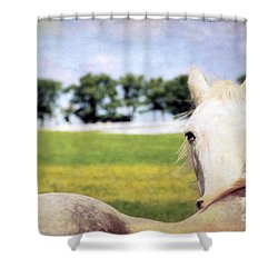 The Stare Shower Curtain by Darren Fisher