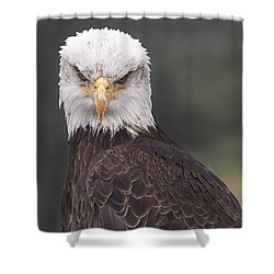 The Stare Shower Curtain by Eunice Gibb