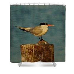 The Tern Shower Curtain by Ernie Echols