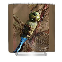 The Thorax Shower Curtain by Carol Groenen