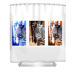 Shower Curtain featuring the photograph The Three Zebras White Borders by Rebecca Margraf