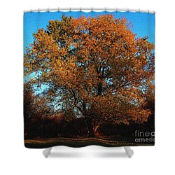 The Tree Of Life Shower Curtain by Davandra Cribbie