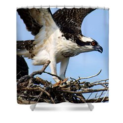 The True Fisherman Shower Curtain by Karen Wiles