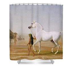 The Wellesley Grey Arabian Led Through The Desert Shower Curtain by Jacques-Laurent Agasse