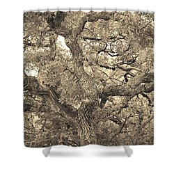 The Wicked Tree Shower Curtain