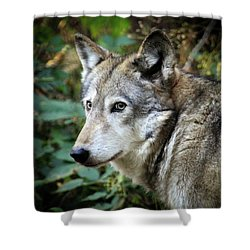 Shower Curtain featuring the photograph The Wolf by Steve McKinzie