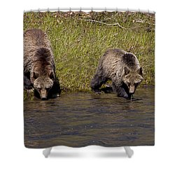 Shower Curtain featuring the photograph Thirsty Grizzlies by J L Woody Wooden
