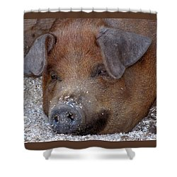 This Little Piggy Took A Nap Shower Curtain