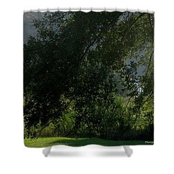 Shower Curtain featuring the photograph This Ole Tree by Maria Urso