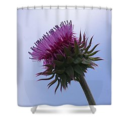 Thistle 1 Shower Curtain