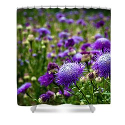 Thistle Field Shower Curtain by Tamyra Ayles