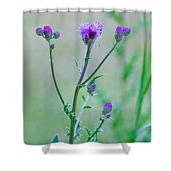 Thistledown Pastel Passion Shower Curtain