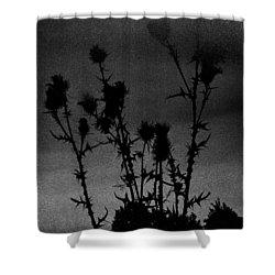 Thistles Shower Curtain by Hakon Soreide