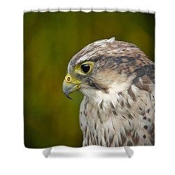 Shower Curtain featuring the photograph Thoughtful Kestrel by Clare Bambers